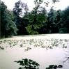 Lipiński staw wparku dworskim - © Edward Ślusarz 2003