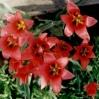 Kwiaty lata - © Edward Ślusarz 2003