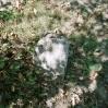 Galicyjskie cmentarze wojenne - © Janusz Karp 2004