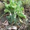 I znowu nadeszła wiosna...