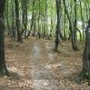 Ścieżka w Wapiennem - © Wiktor Bubniak 2006