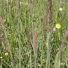Lipińskie łąki 2003