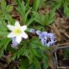 Nareszcie wiosna - fot. Artur Litwa 2009