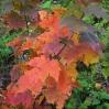 Jesienna mozaika - © Leszek Witkowski - 2004