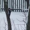 Zimowi goście - fot.Edyta iBogusław Kobosowie