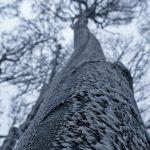 Zimowe krajobrazy 2013 – fot.Anita Gurbisz