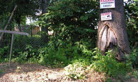 Kto zamienia stary cmentarz wLipinkach wśmietnisko?