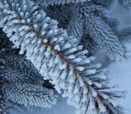 Zima jest piękna… Fotografie Bogusława Kobosa