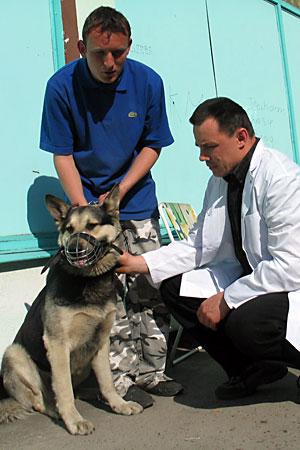 Szczepienie psów przeciw wściekliźnie