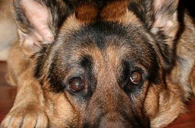 Właściciel psa poszukiwany