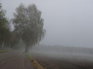 Prognoza niezbyt optymistyczna: Deszcz, śnieg izimno…