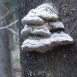 Wdrodze naDiabli Kamień