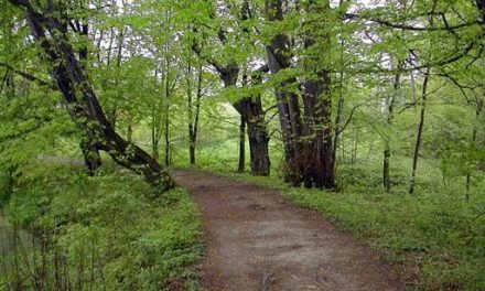 Dworski park wLipinkach