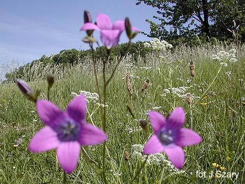 Lipińskie łąki