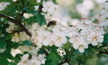 Góra Krygowska wiosną