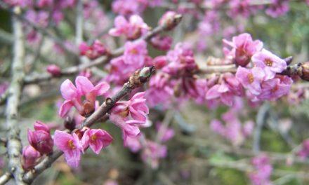 Iznowu nadeszła wiosna…