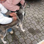 Wójtowa: Szczepienie psów przeciwko wściekliźnie