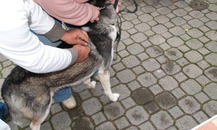 Szczepienie psów wLipinkach