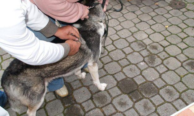 Wójtowa: Harmonogram szczepienia psów przeciwko wściekliźnie