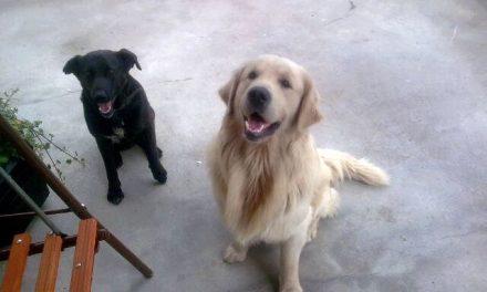 Dwa sympatyczne psy poszukują właściciela