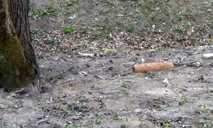 Wparku wLipinkach odnaleziono niewybuch