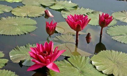 Zabytkowy park wLipinkach: Czas narośliny wodne iprzybrzeżne