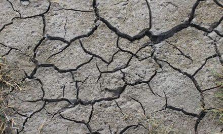 Pomoc dla rolników dotkniętych suszą. Wnioski dokońca września!