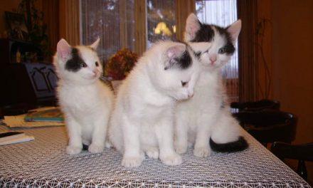 Śliczne kocięta oddam wdobre ręce!
