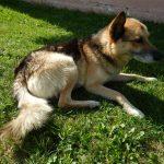 Poszukujemy domu dla trzech psów zterenu gminy Lipinki