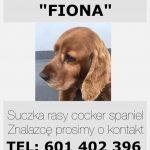 Zaginęła Fiona – suczka cocker spaniel