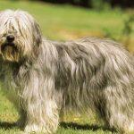 Dwa psy zaginęły wokolicach Bednarki. Prosimy opomoc!