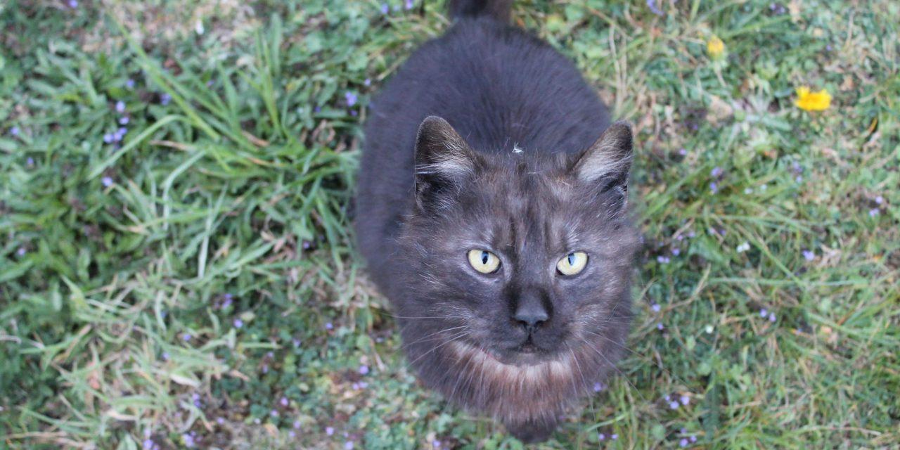 Poszukiwany właściciel czarnego kota znalezionego wLipinkach!