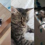 Szukamy domu dla trójki uroczych kotków!
