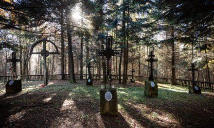 Cmentarz wojenny nr103 wPagorzynie. Galeria fotografii Wiktora Bubniaka