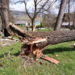 Runęło kolejne drzewo nastarym cmentarzu wLipinkach. Szkody są spore!