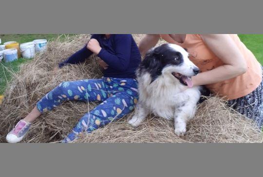 Zaginął pies Norek zBednarskiego. Ostatnio był widziany wKorczynie k. Biecza