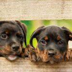 Wtym tygodniu szczepienie psów przeciwko wściekliźnie wRozdzielu, Bednarce iLipinkach
